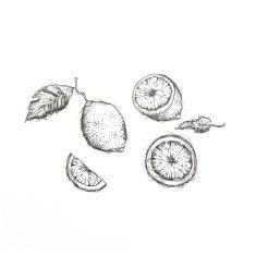 LEMONS / hand sketched