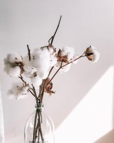 INTERIORS / cotton