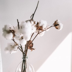 INTERIORS / cotton
