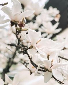 JAPAN / flowers